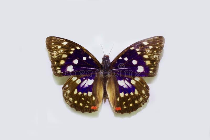 Schmetterling auf einem sauberen Hintergrund lizenzfreie stockfotos