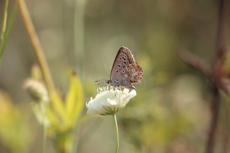 Schmetterling auf einer blühenden Blume stockfoto