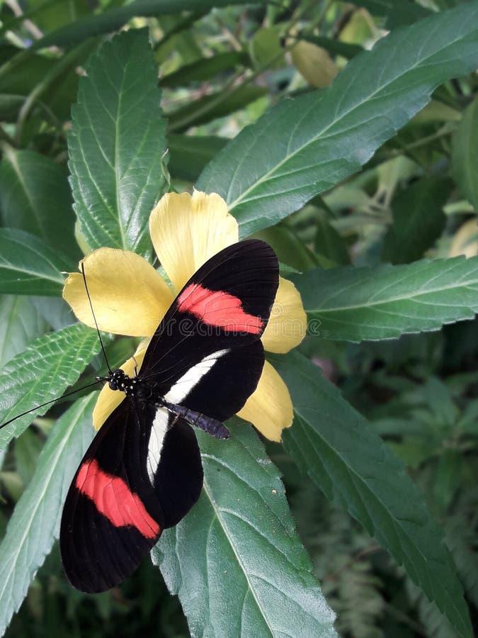Schmetterling auf einer Blume stockfotografie