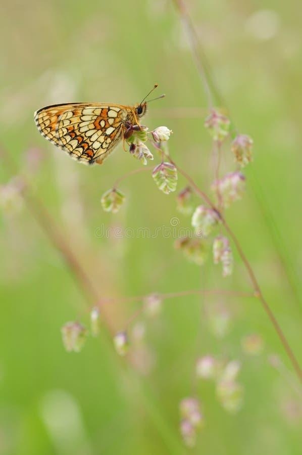 Schmetterling auf einer Blume in der Wiese lizenzfreie stockfotografie