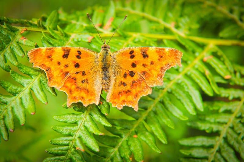 Schmetterling auf Farn stockbild