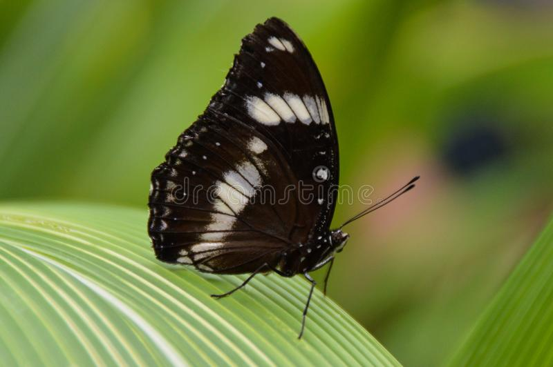 Schmetterling auf großem strukturiertem Blatt stockbilder