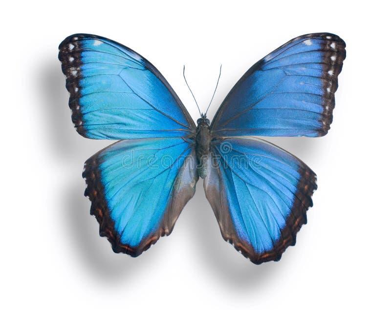 schmetterling auf wei stockbild bild von blau farbe 40804525. Black Bedroom Furniture Sets. Home Design Ideas