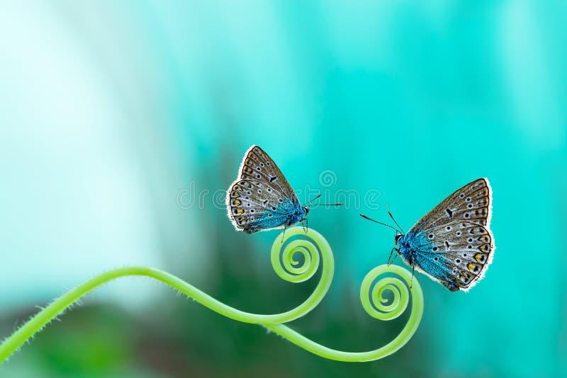 Schmetterling auf Wiese, Feldblumen und Gras, schöne Sommerlandschaft, lizenzfreies stockfoto