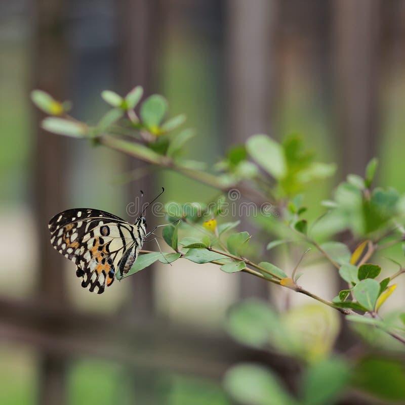 Schmetterling auf Zweig stockbild