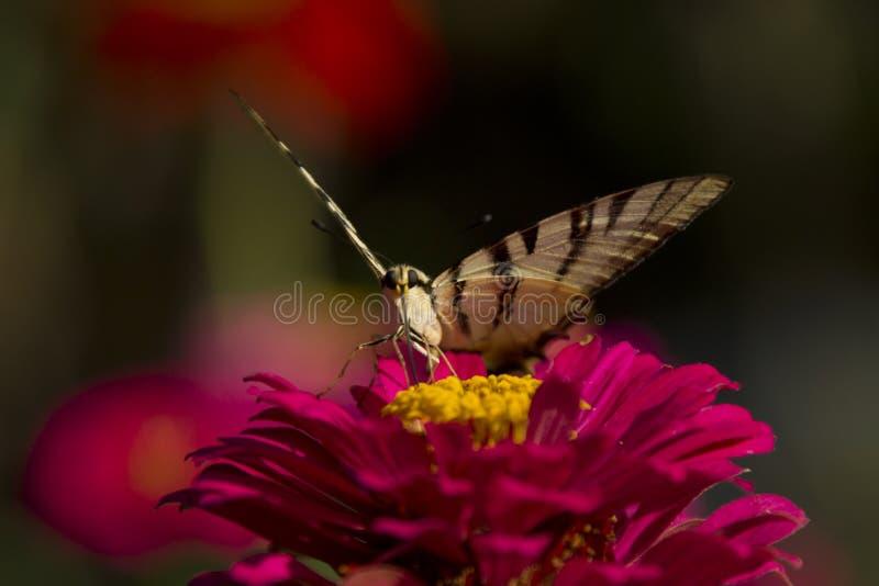 Schmetterling, der auf roter Blume sitzt