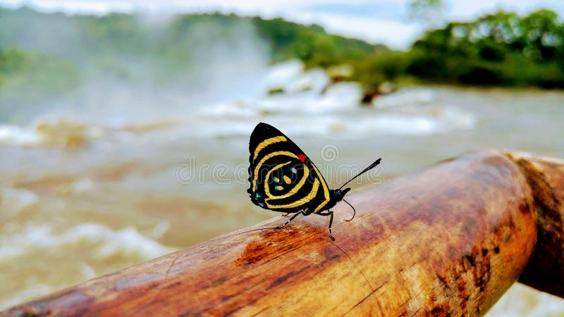Schmetterling, der in Iguazu stillsteht lizenzfreies stockbild
