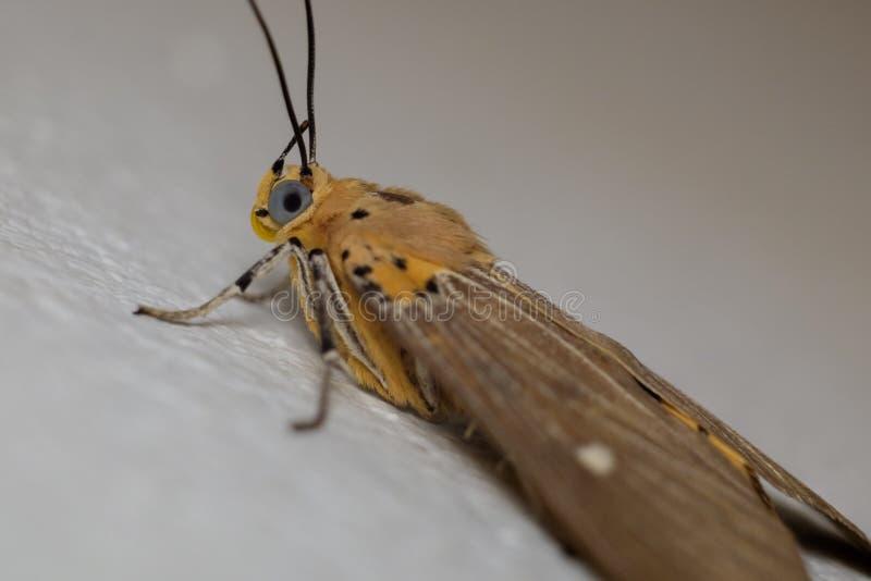 Schmetterling in der Makrophotographie lizenzfreie stockfotos