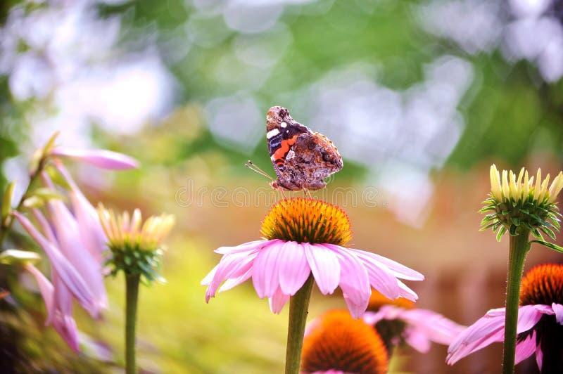 Schmetterling des roten Admirals über einem Herzen formte bokeh Hintergrund lizenzfreies stockbild