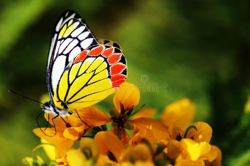 Schmetterling - die eigene Zeichnung der Natur lizenzfreie stockfotos
