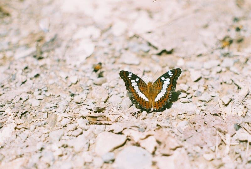 Schmetterling gegen einen Steinhintergrund lizenzfreie stockbilder