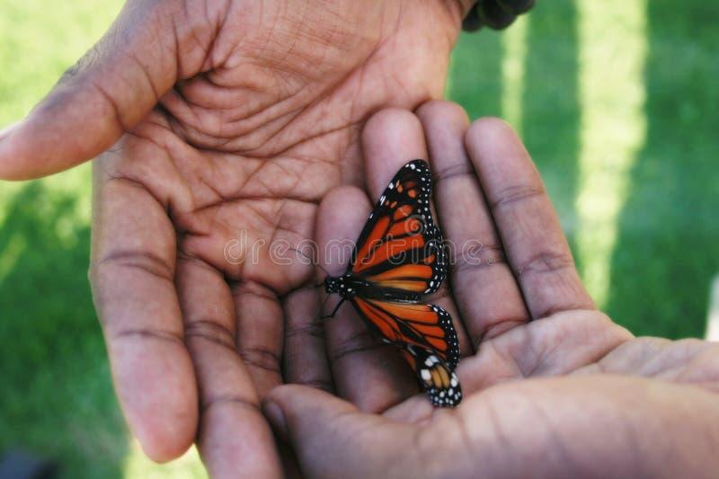 Schmetterling gehöhlt in den Handreichungen lizenzfreie stockfotografie