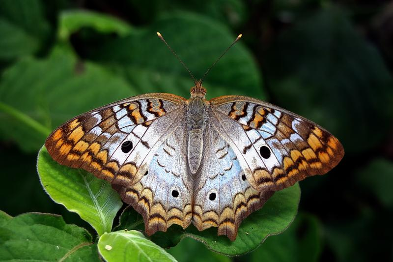 Schmetterling gehockt auf einem Blatt lizenzfreies stockfoto