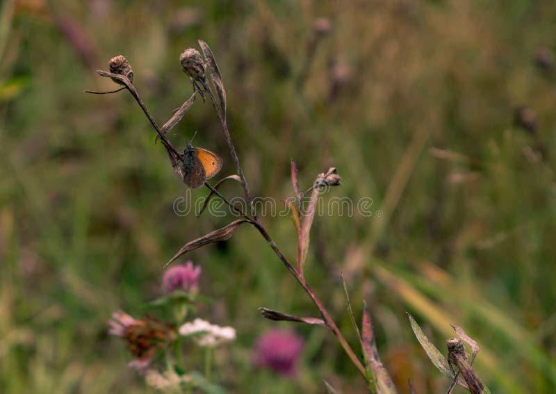 Schmetterling gesessen auf Blume lizenzfreies stockfoto