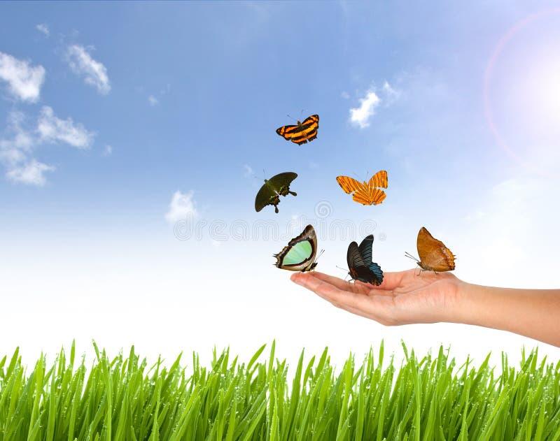 Schmetterling an Hand und Naturhintergrund stockfotografie