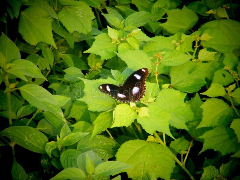 Schmetterling hd Tapete lizenzfreie stockbilder