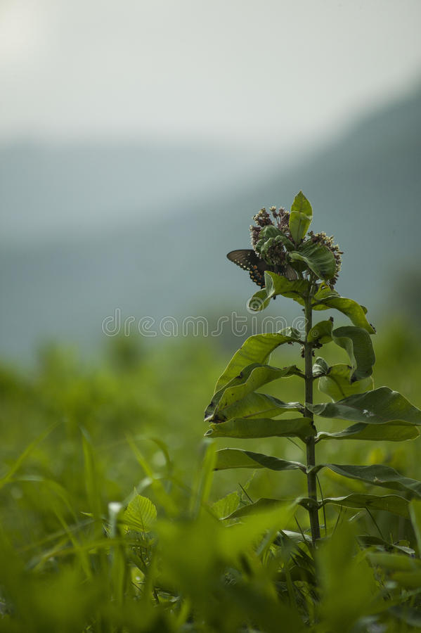 Schmetterling im Ruhezustand lizenzfreie stockbilder