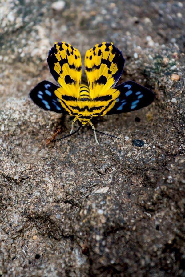Schmetterling, Insekt und Tier lizenzfreies stockfoto