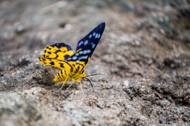 Schmetterling, Insekt und Tier lizenzfreies stockbild