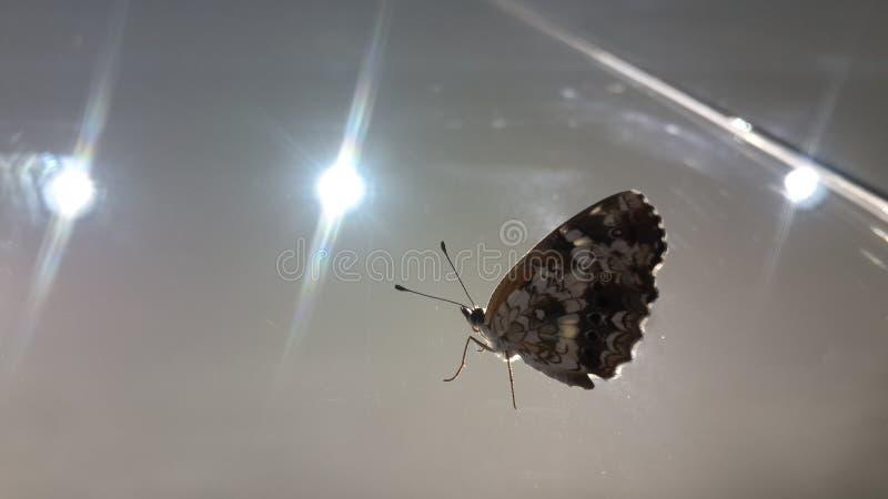 Schmetterling Mary stockbild