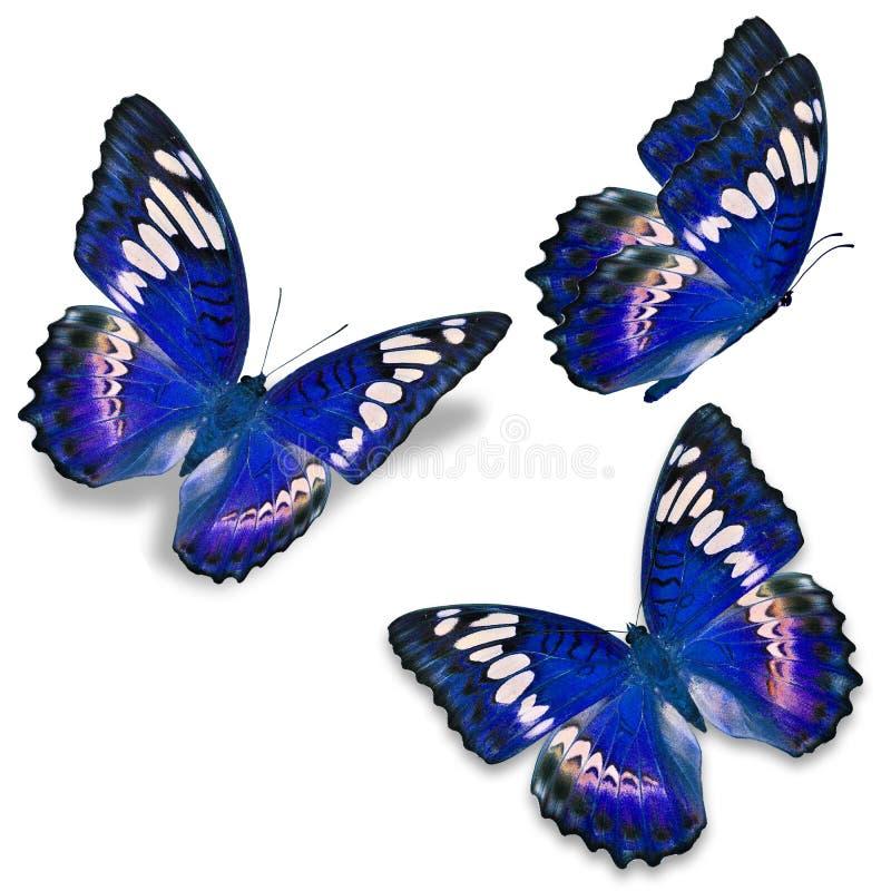 Schmetterling mit drei Blau lizenzfreie abbildung