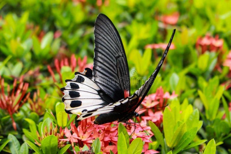 Schmetterling mit roten Blumen stockbilder