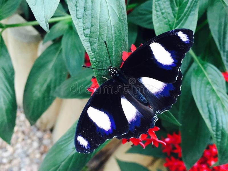 Schmetterling sind auf einem Blatt lizenzfreie stockbilder