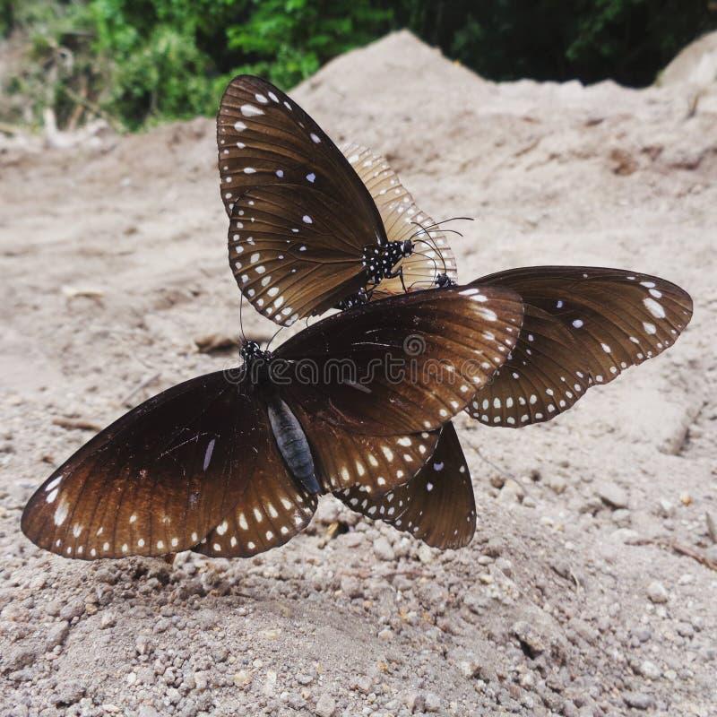 Schmetterling in Thailand lizenzfreie stockfotos