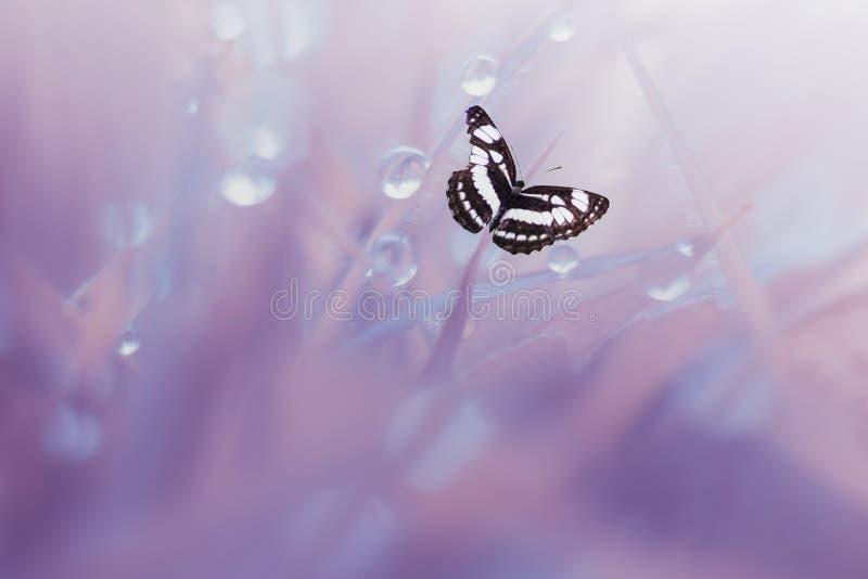 Schmetterling, Tiere, Makro, bokeh, Insekt, Natur, stockfoto
