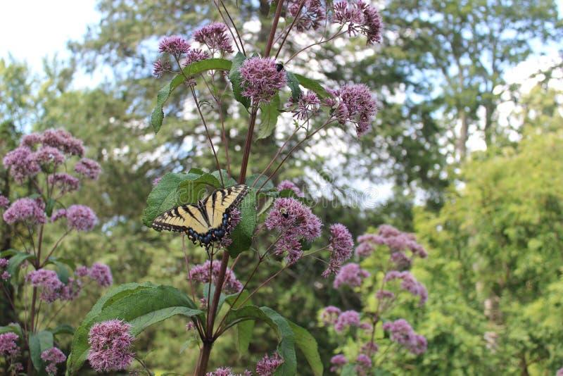 Schmetterling und Bienen, die auf einer Blume stillstehen lizenzfreie stockfotografie