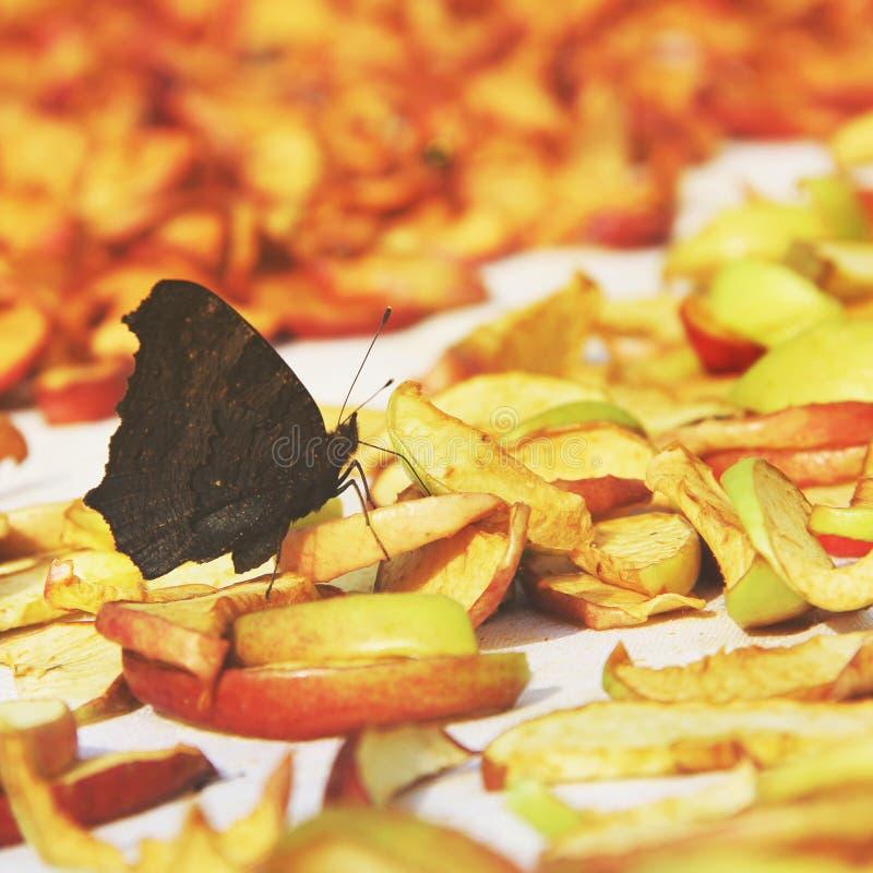 Schmetterling und getrocknete Äpfel lizenzfreie stockbilder