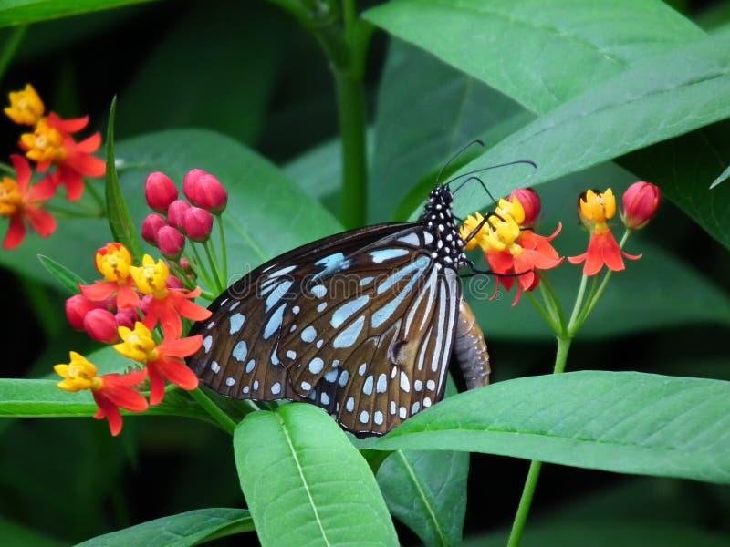 Schmetterling und Natur 7 stockfotografie