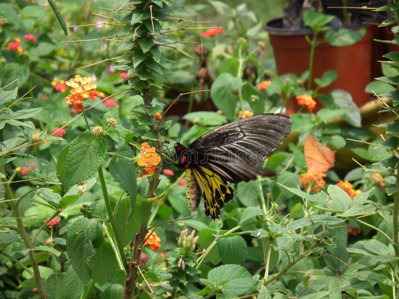Schmetterling und Natur 12 stockfotos