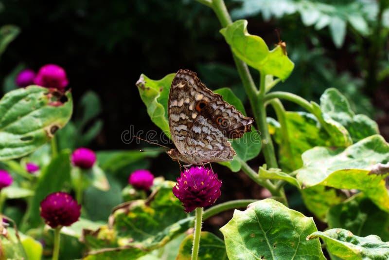 Schmetterling und rosa Blume im Garten stockfotografie