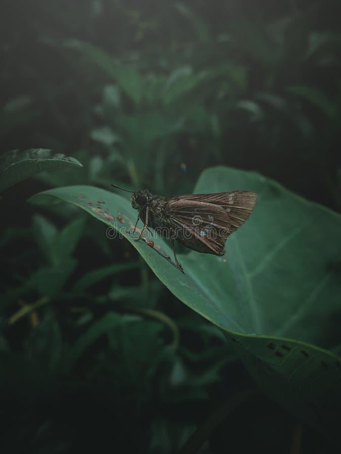 Schmetterling zu den dunklen Farben stockbild