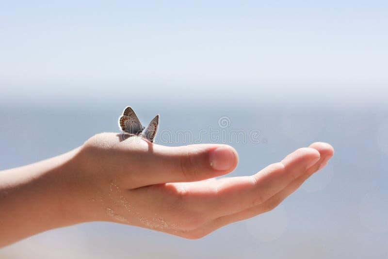 Schmetterlinge auf der Hand lizenzfreie stockfotos