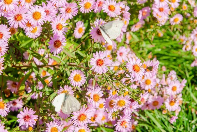 Schmetterlinge auf einer Blume stockbilder