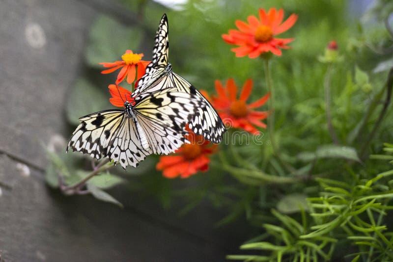 Schmetterlinge, die zu einer Blume Guten Tag sagen lizenzfreie stockfotos