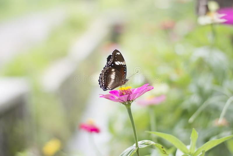 Schmetterlinge im Blumengarten stockfoto