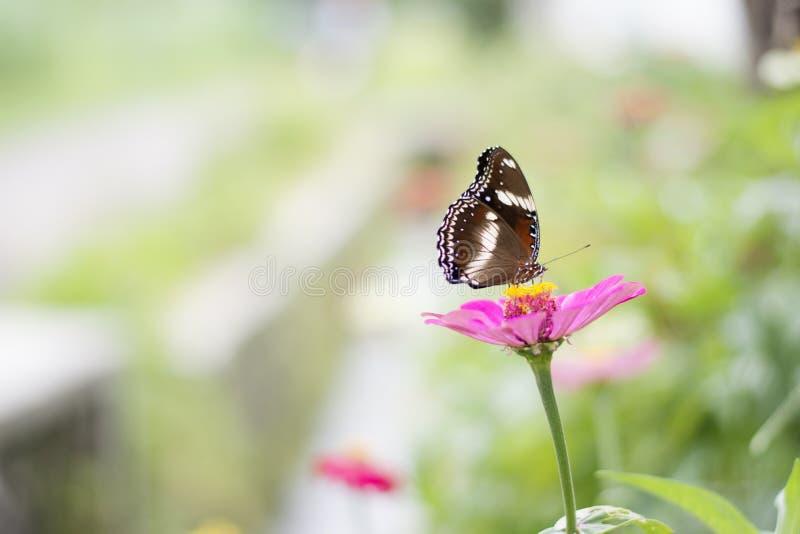 Schmetterlinge im Blumengarten lizenzfreie stockbilder