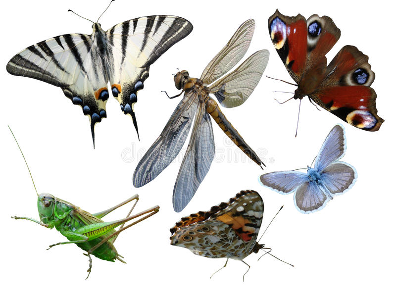 Schmetterlinge, Libelle, eine Heuschrecke, andere Insekten lizenzfreies stockfoto