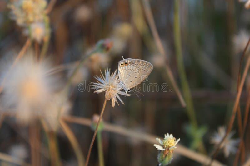 Schmetterlinge saugen Blumen stockbild
