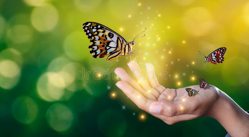 Schmetterlinge sind in den Händen von Mädchen mit funkelndem süßem Treffen der Lichter zwischen einem menschlichen Handschmetterl lizenzfreie stockfotografie
