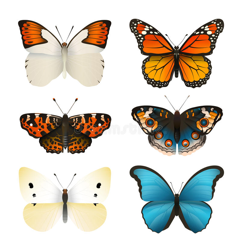 Schmetterlinge vector Satz Bunter flacher Schmetterling Realistische Farbsteigung lizenzfreie abbildung