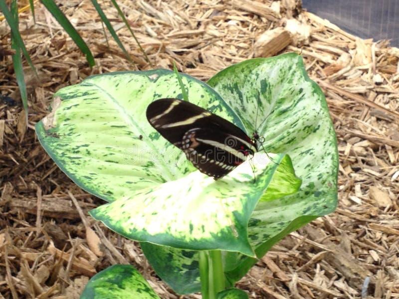 Schmetterlings-Garten stockfotos