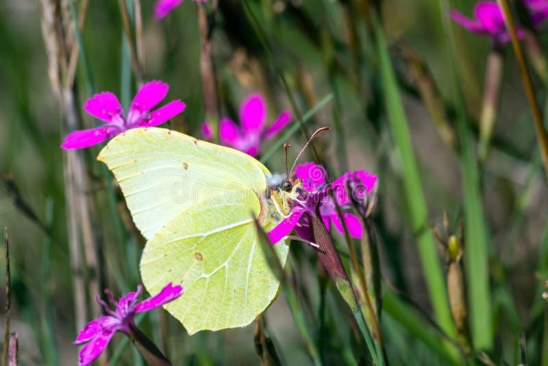 Schmetterlings-Makro stockbilder