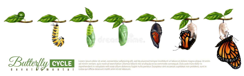 Schmetterlings-Metamorphose-horizontaler Satz stock abbildung