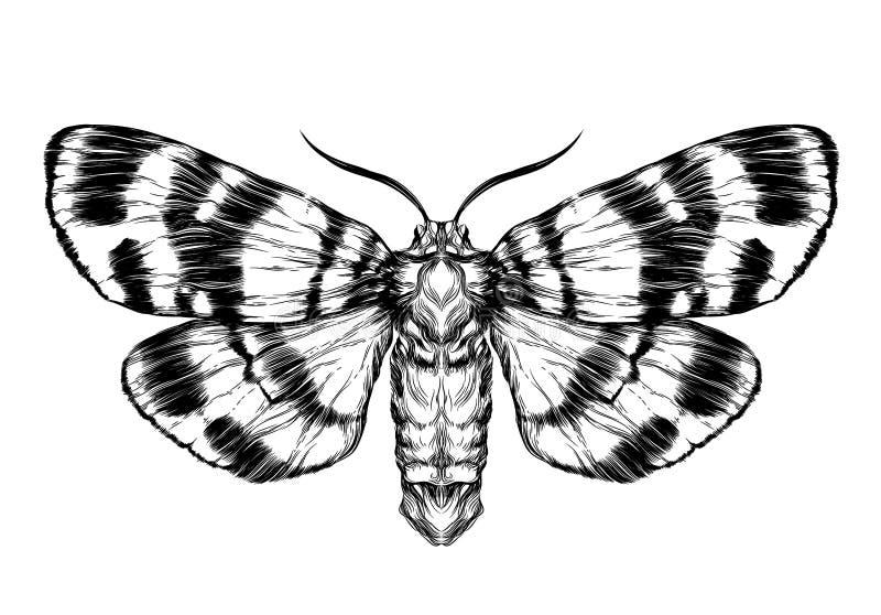 Schmetterlings-/Mottenskizze Ausführliche realistische Skizze eines Schmetterlinges vektor abbildung