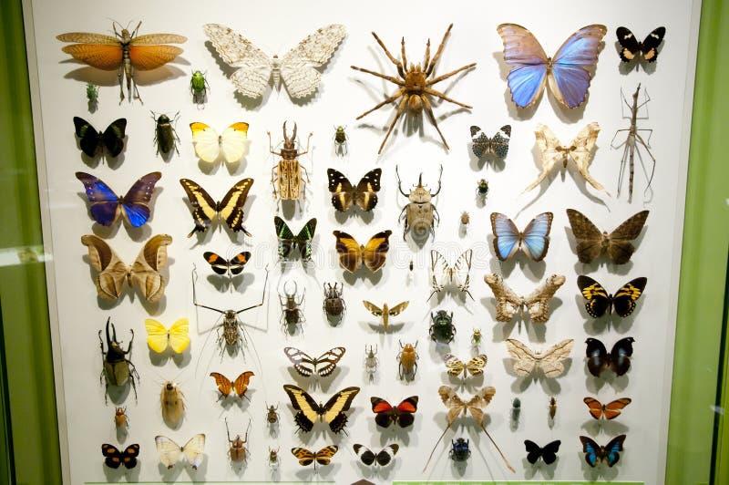Schmetterlingsexemplare lizenzfreie stockbilder