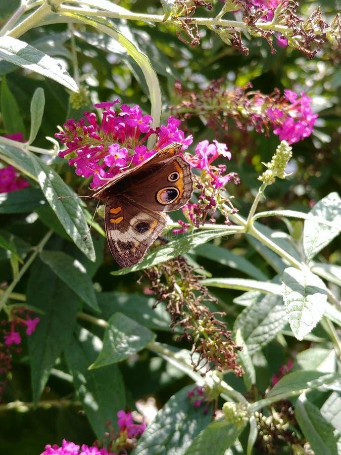 Schmetterlingsfütterung lizenzfreie stockbilder